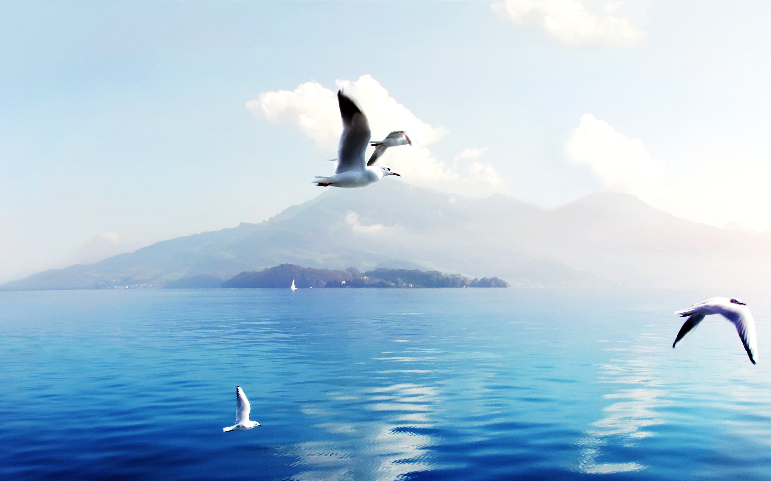 Seagulls in Switzerland 685.72 Kb