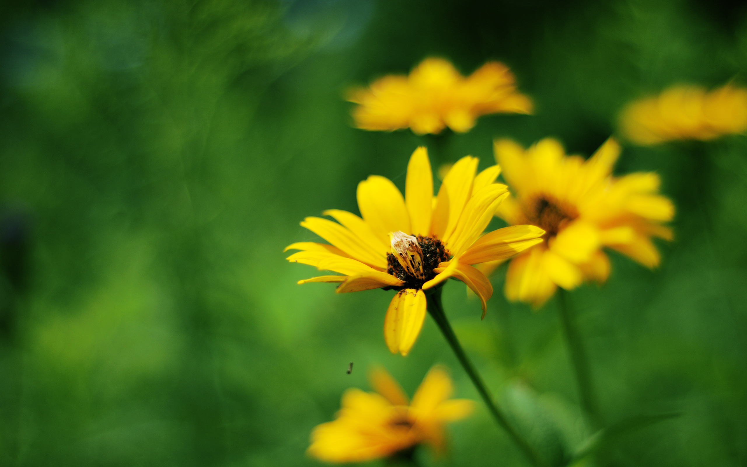 Yellow Summer Flowers 286.77 Kb