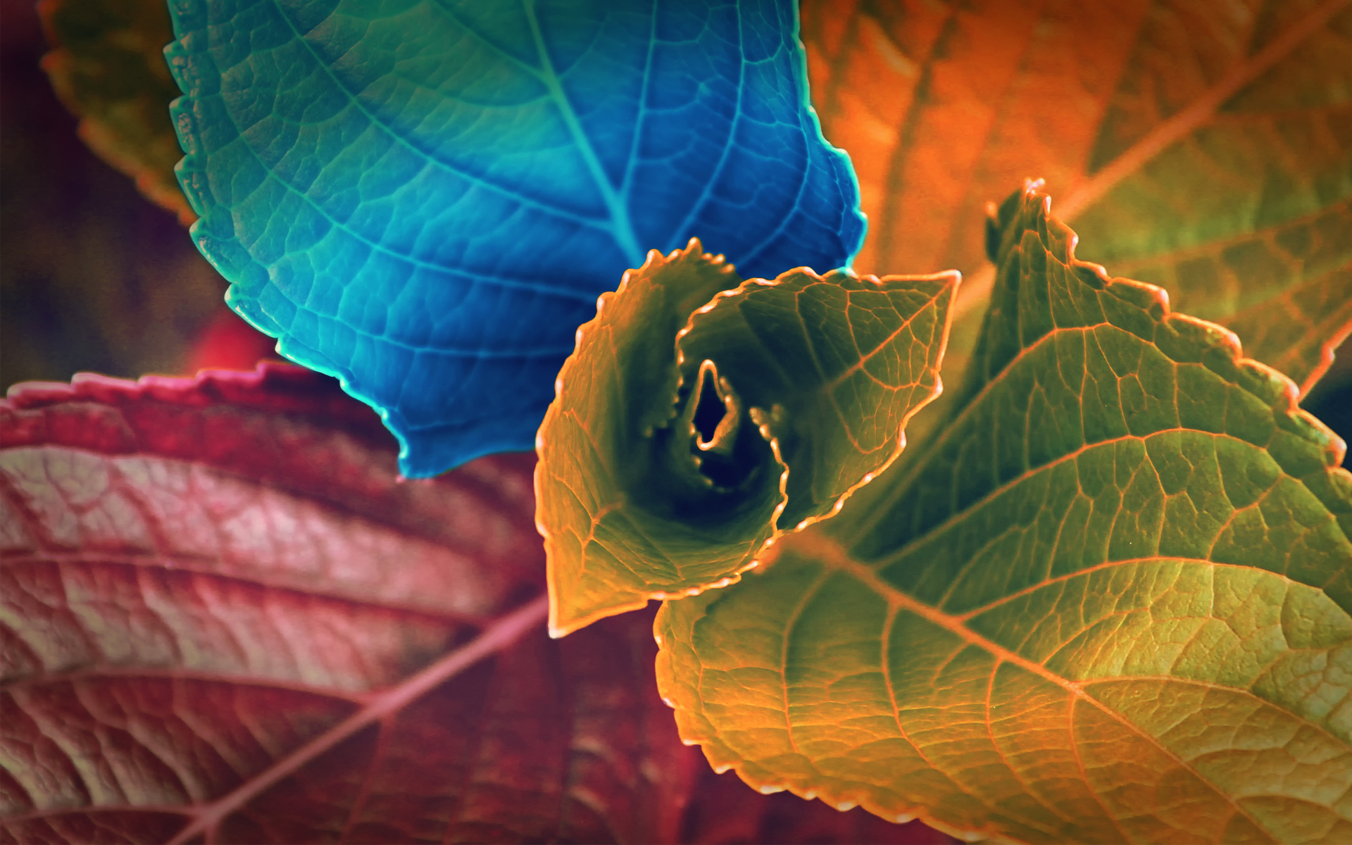 Colors of Leaves 1192.75 Kb
