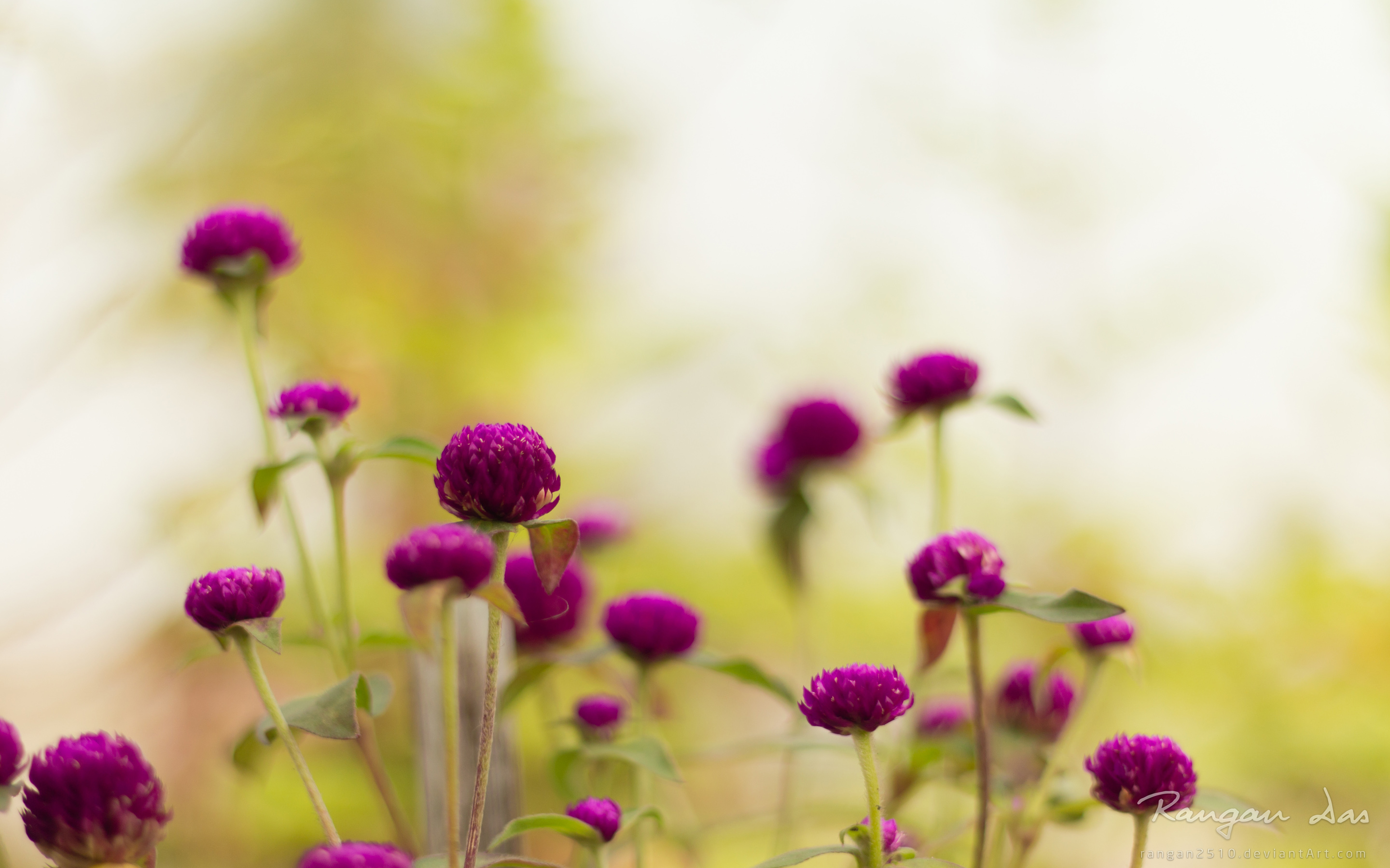 purple garden flowers