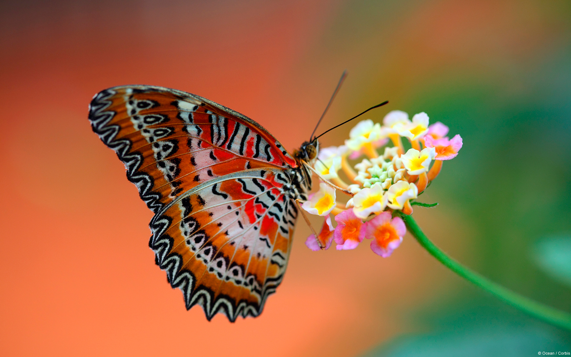 Butterfly On Flower 4162277 1920x1200 All For Desktop