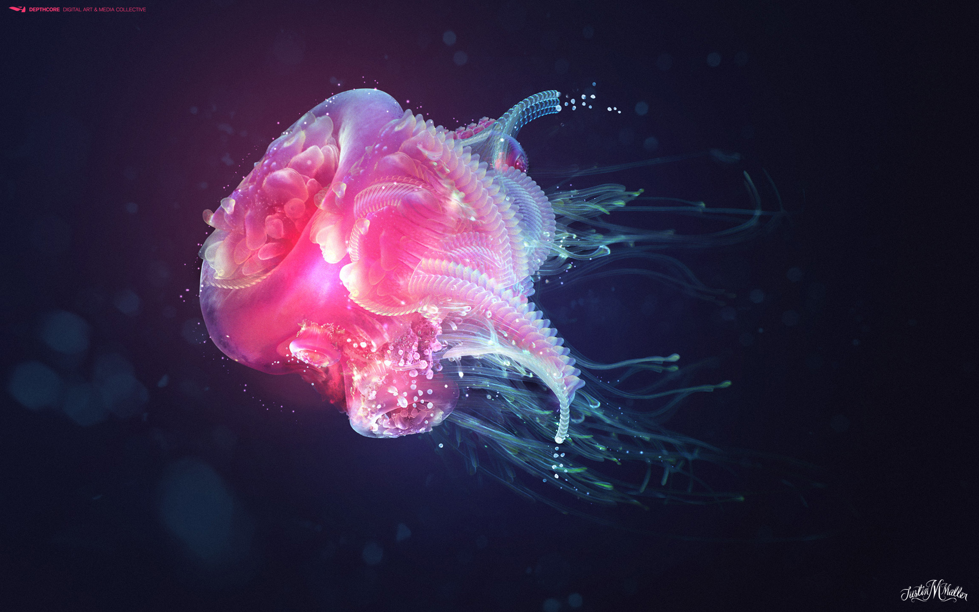 Jellyfish 197.3 Kb