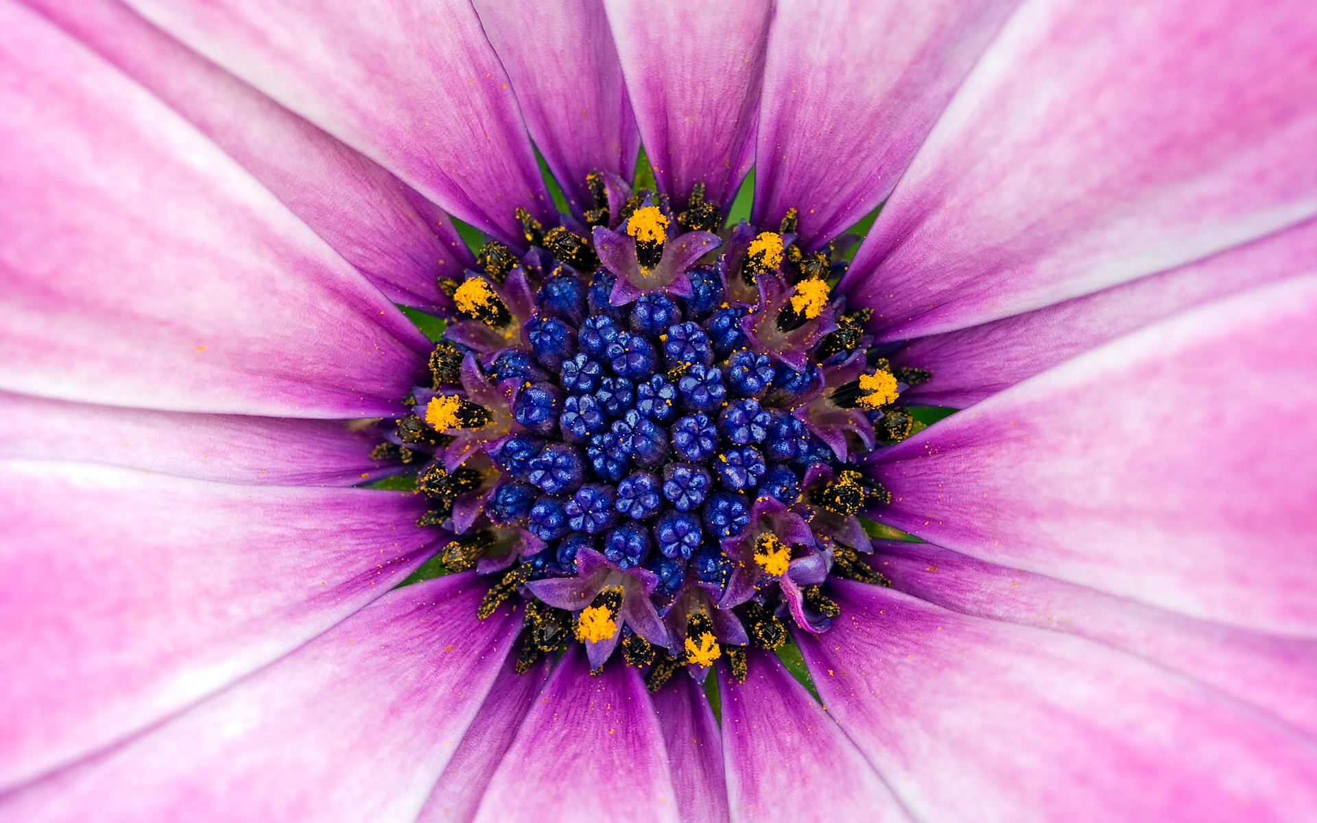 Amazing Purple Flower 1108.7 Kb