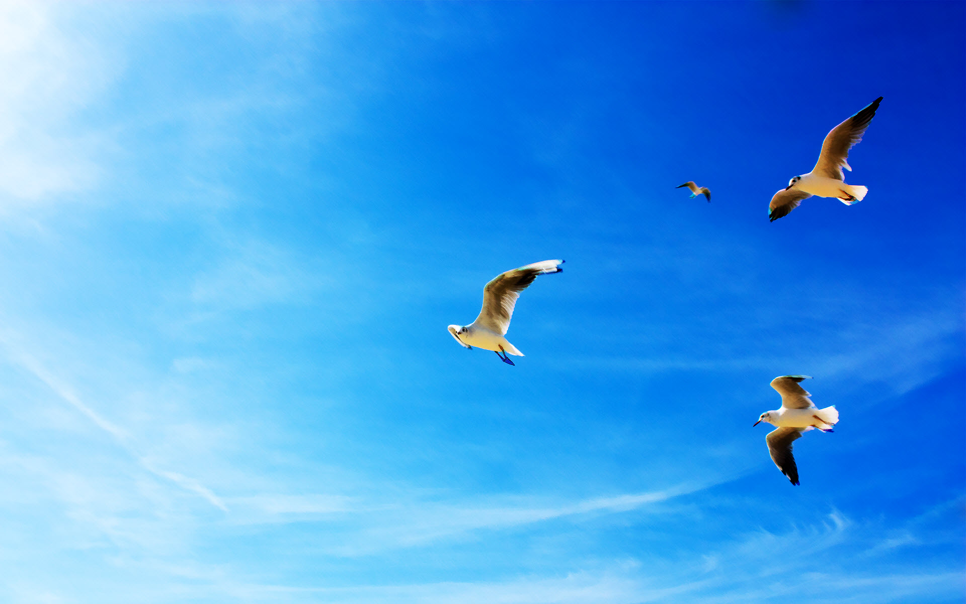 Seagulls in Flight 685.72 Kb