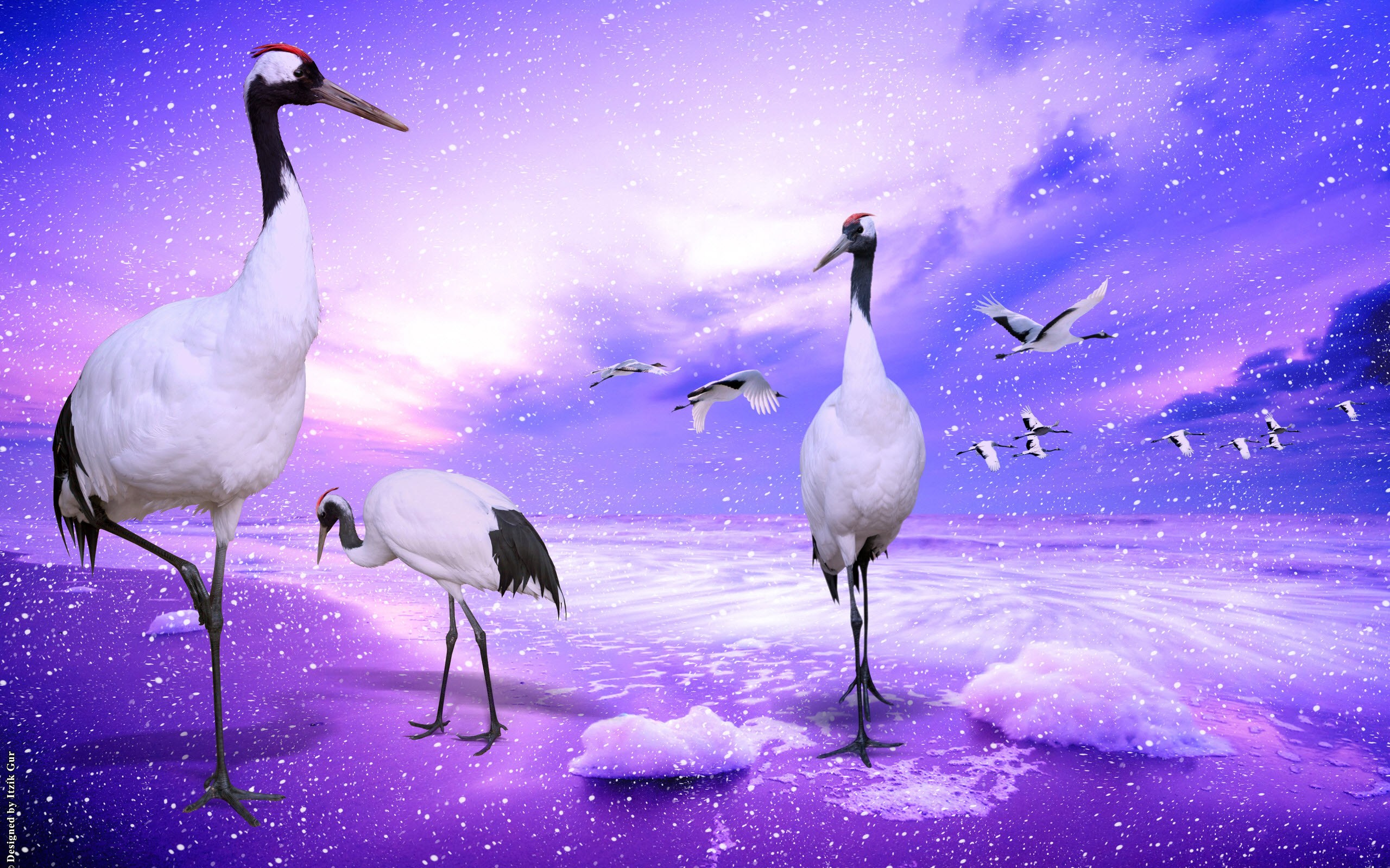 Red Crowned Cranes Japan 954.59 Kb