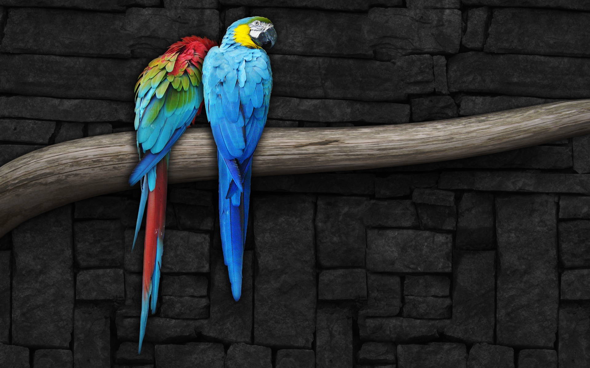 Pair of Parrots 192.47 Kb