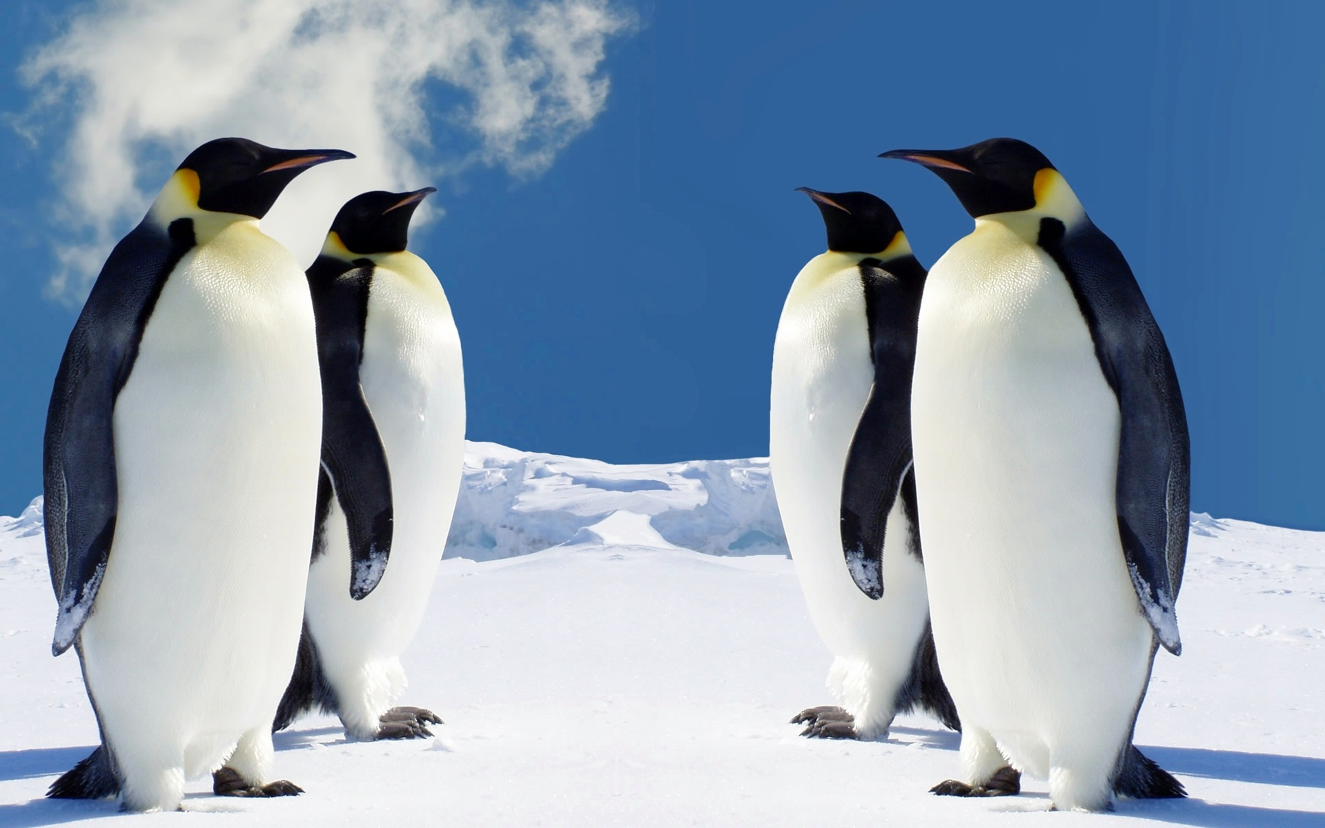 HQ Penguins 840.58 Kb