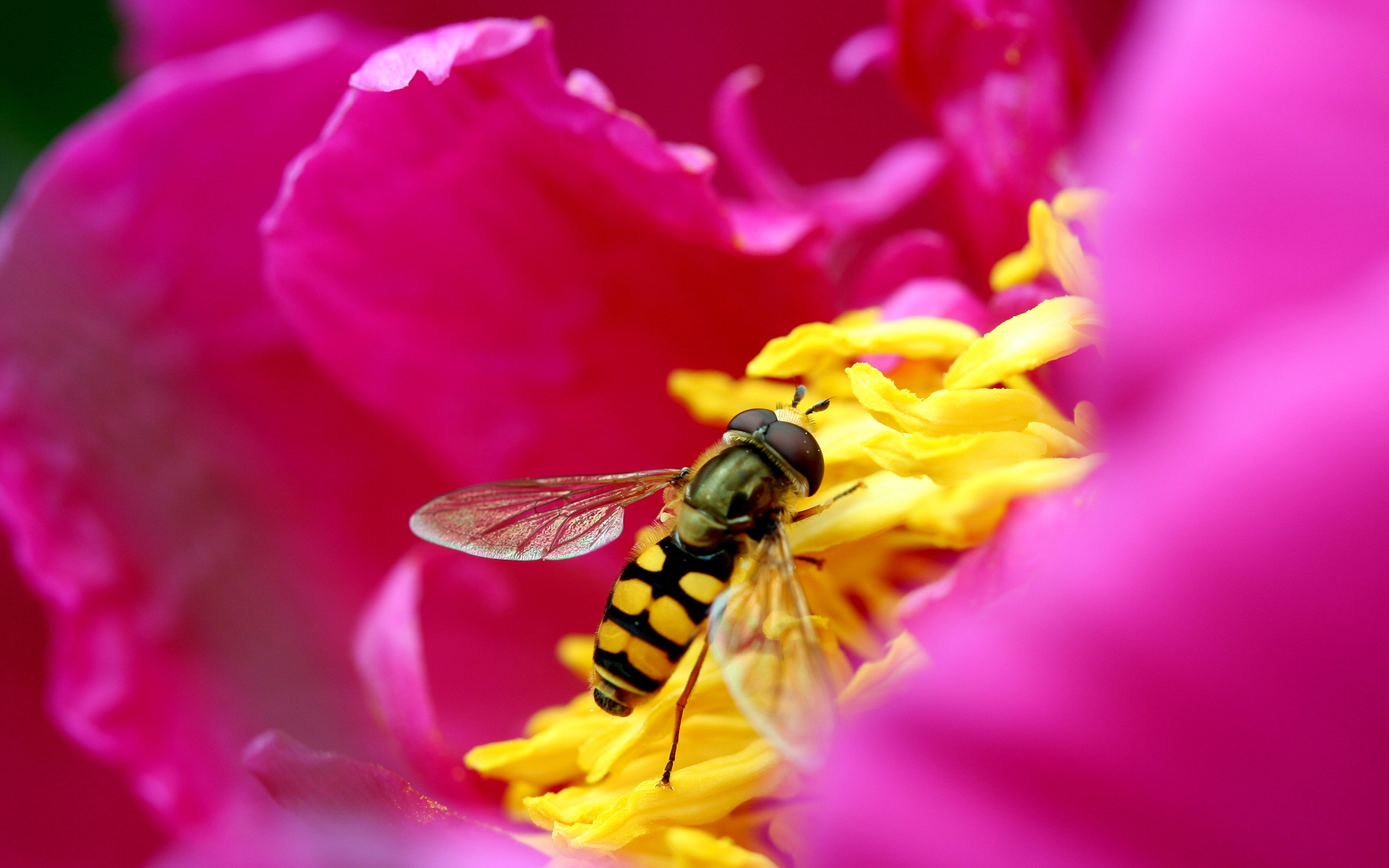 Bee & Flower in HD 864.04 Kb