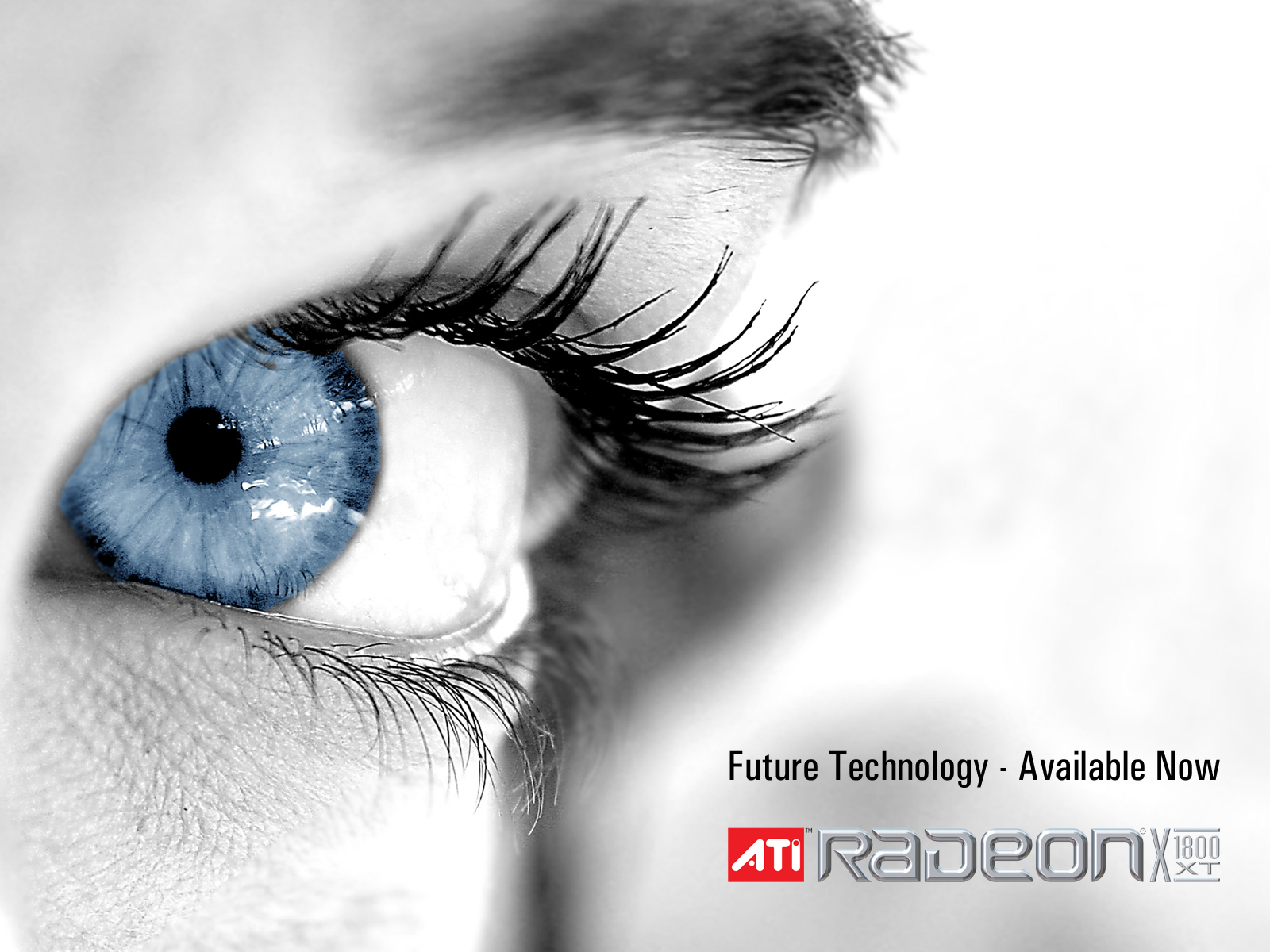 ATI RADEON Future Technology 318.99 Kb