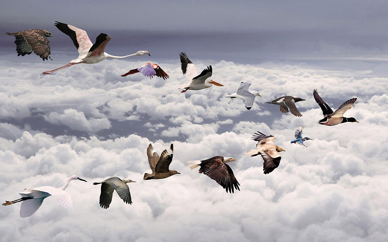 All Birds Widescreen