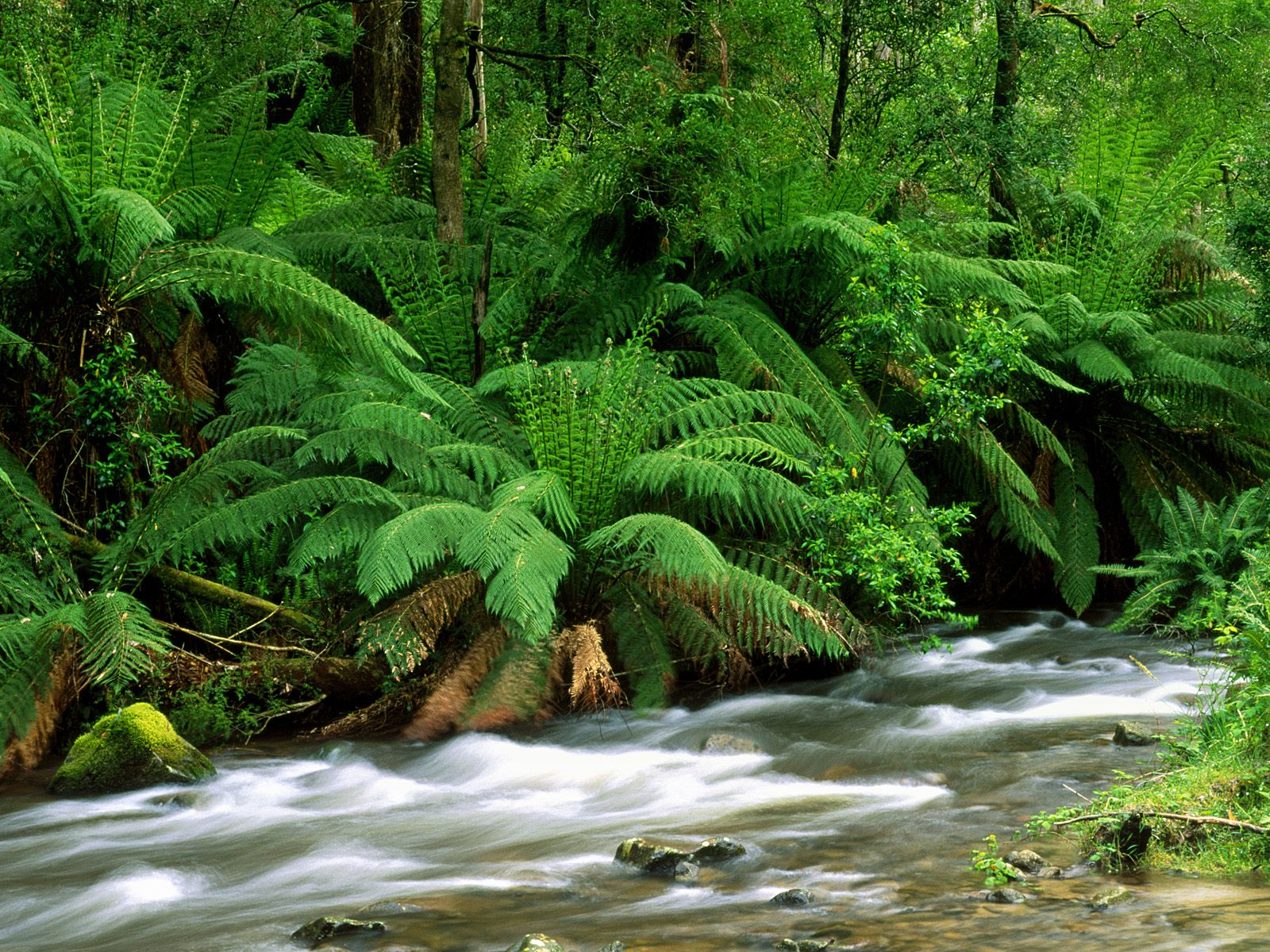 Yarra Ranges National Park  Australia 380.07 Kb