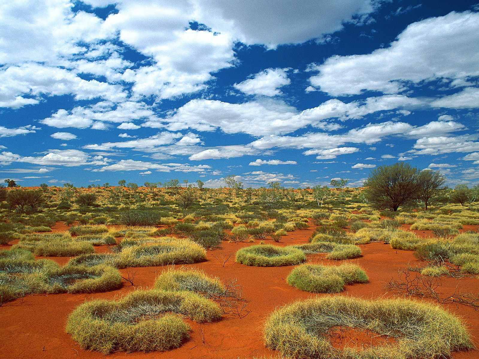 Old Spinifex Rings  Little Sandy Desert  Australia 1441.79 Kb