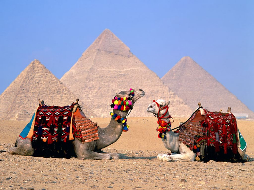 Egypt Cairo Camels