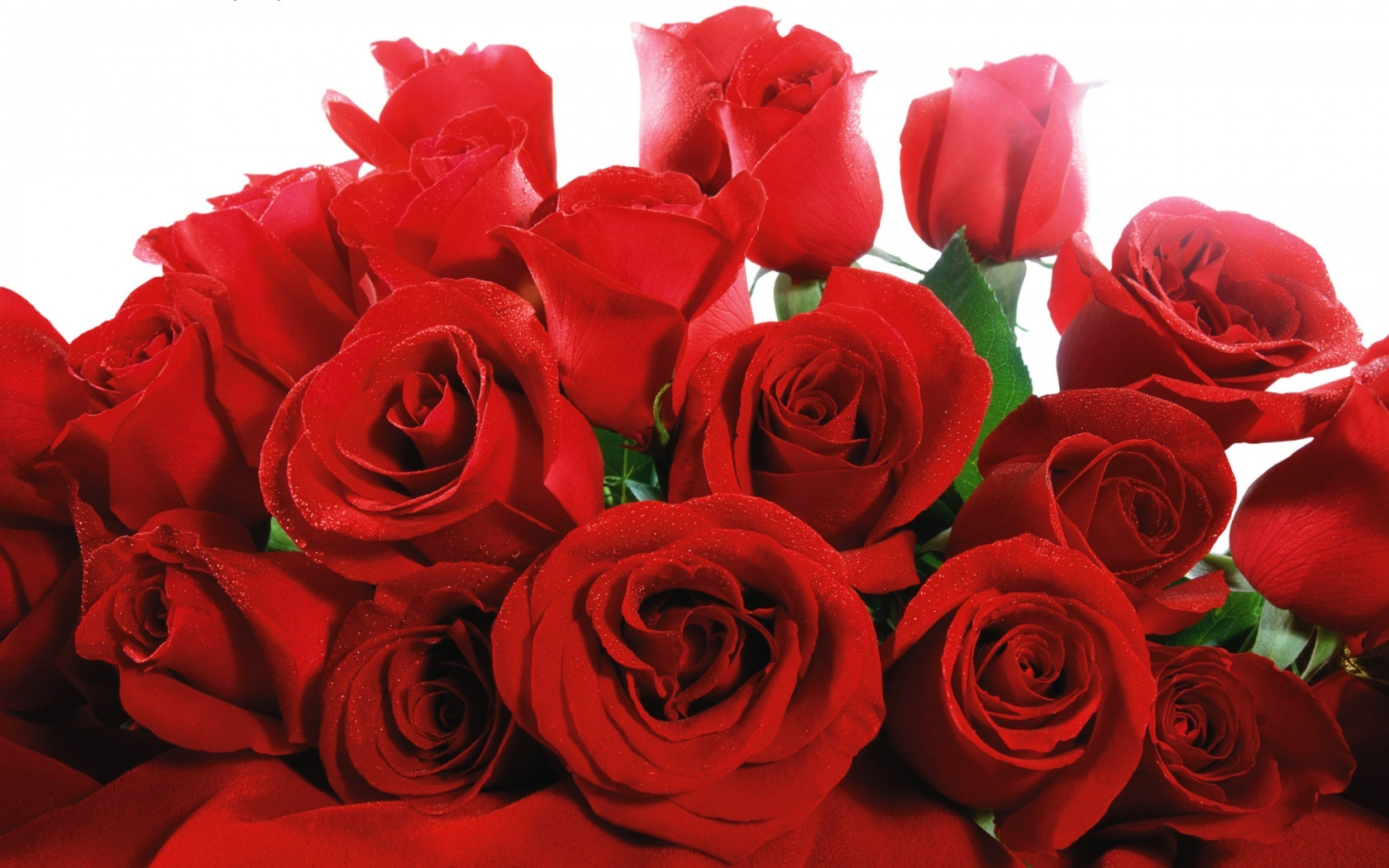 Lovely Red Roses 457.77 Kb