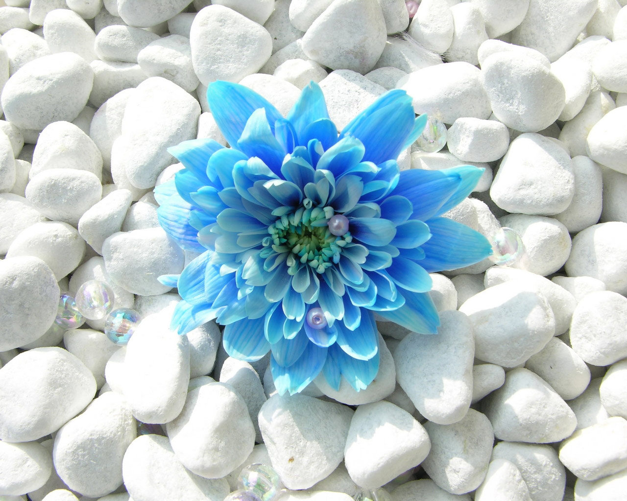 Blue Flower 106 Kb