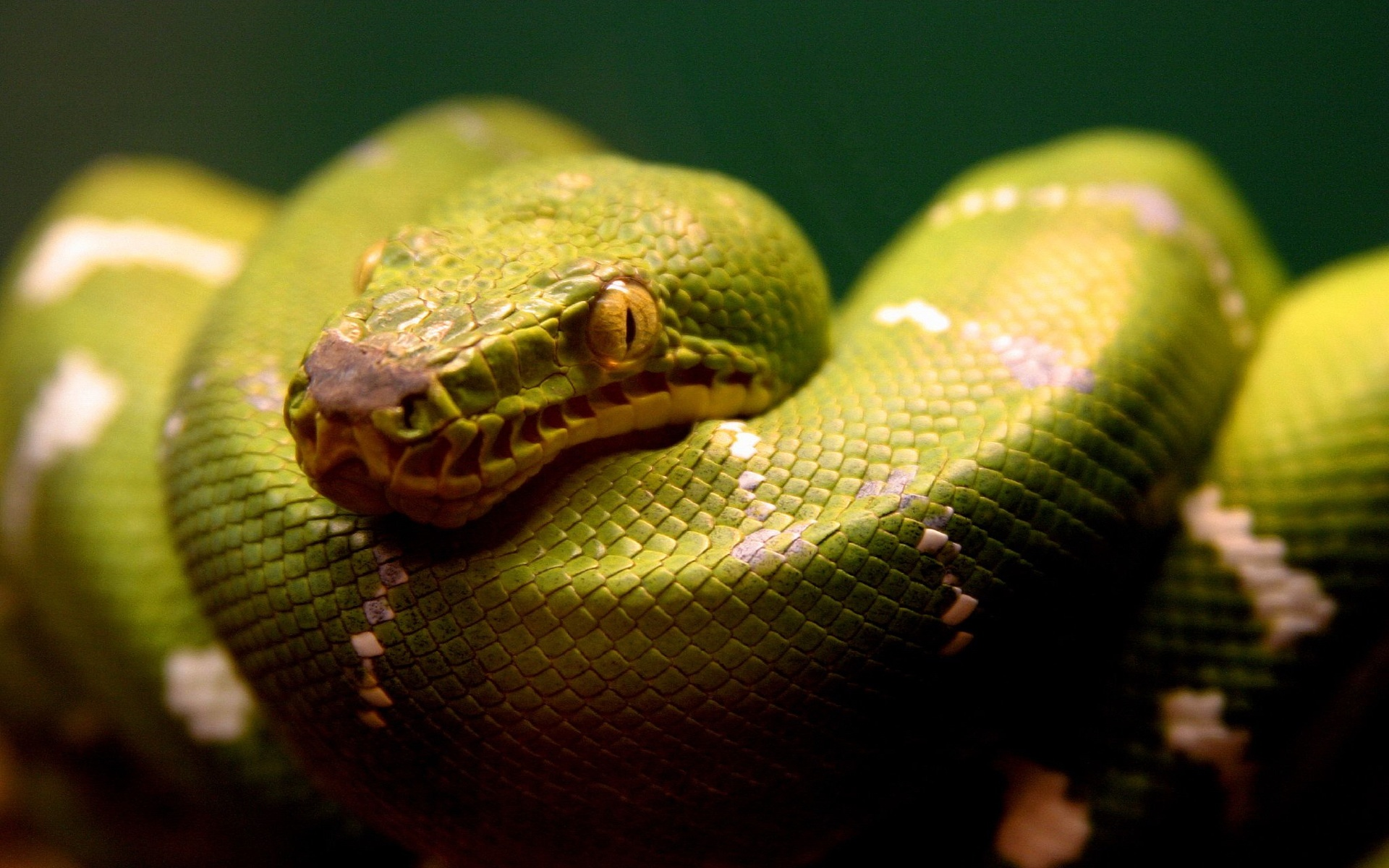 A Green Snake 1216.09 Kb