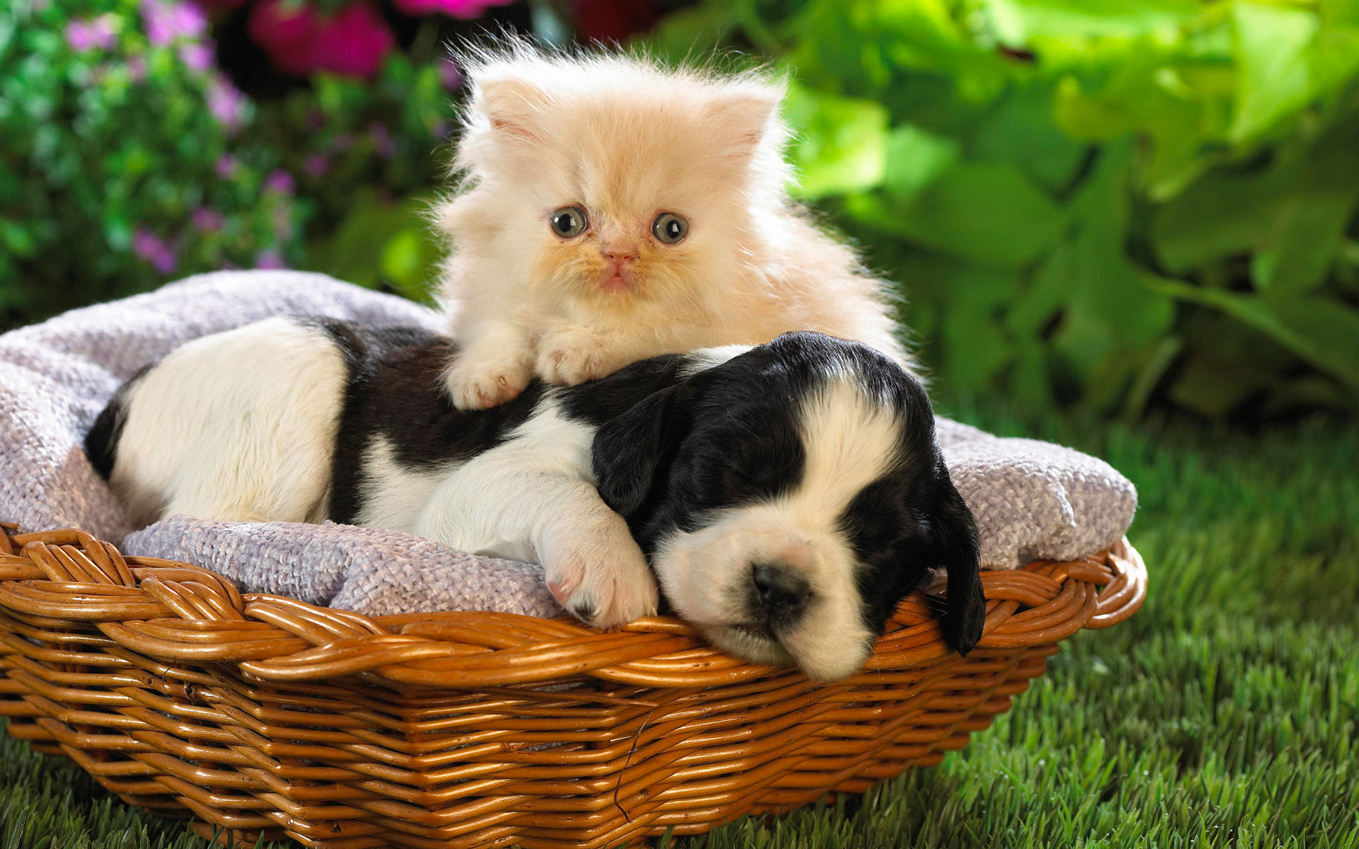 Cute Basket Buddies