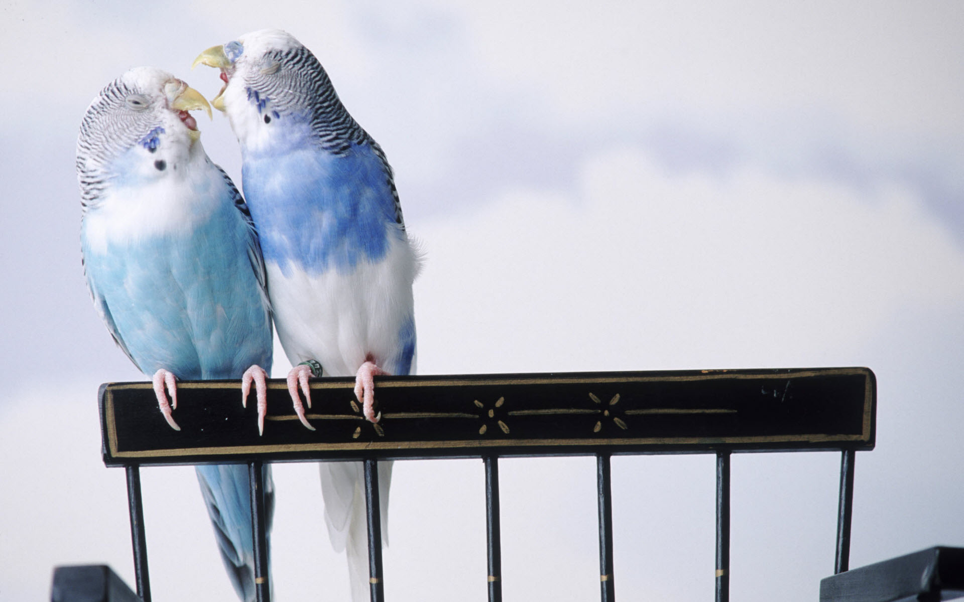 Cantankerous Parakeets