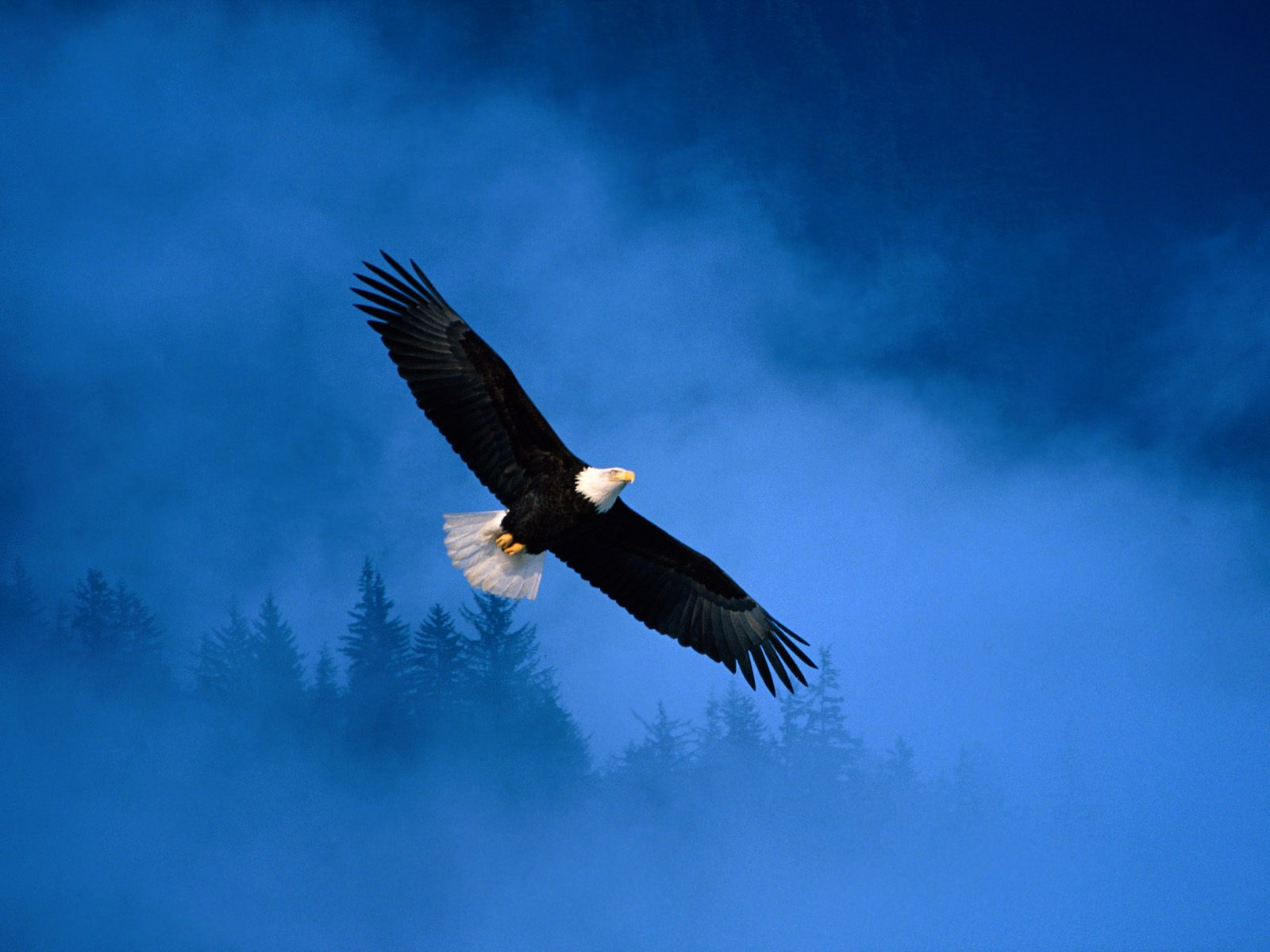 Flight of Freedom Bald Eagle