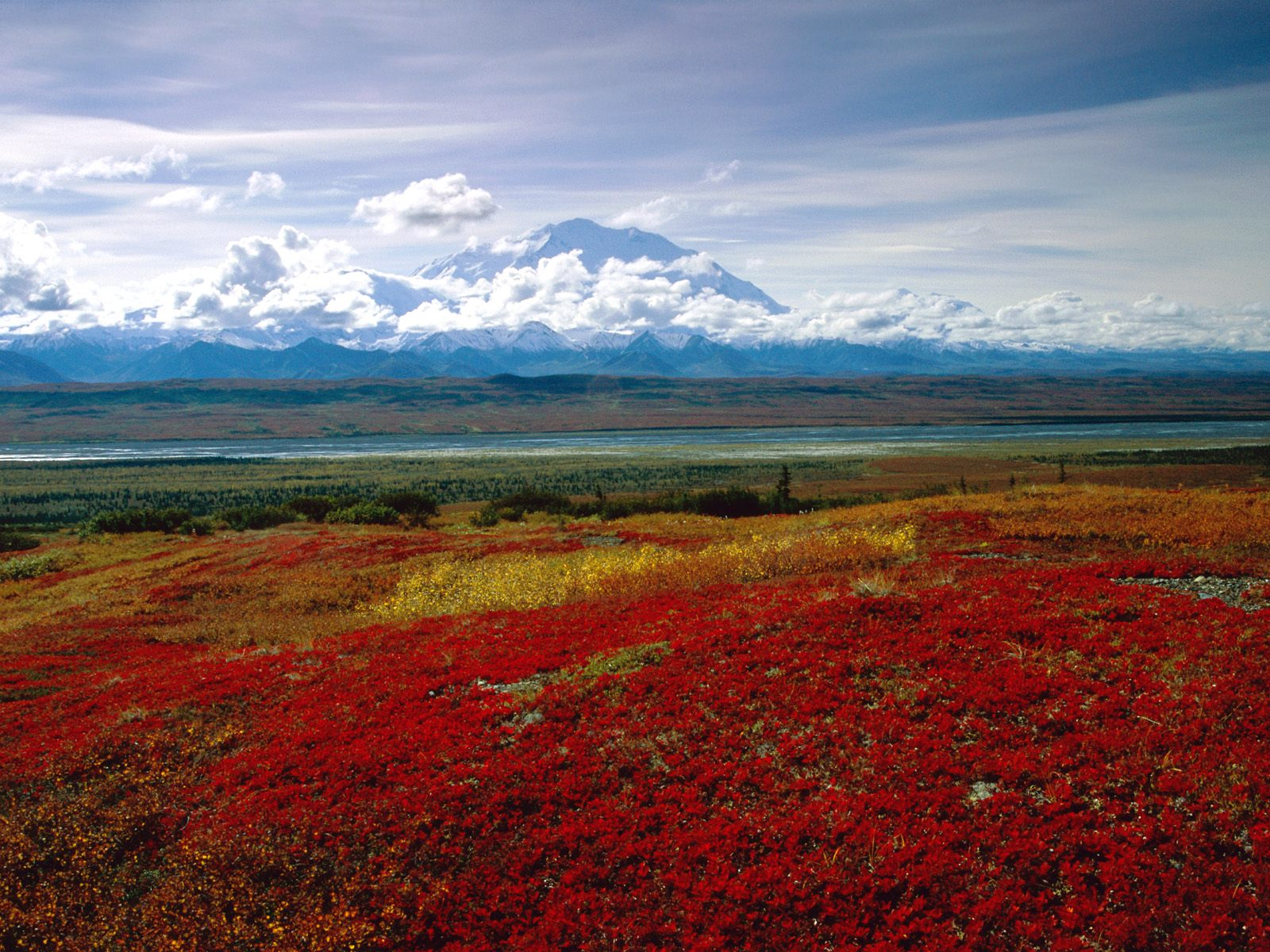 Brilliant Colors of Denali National Park, Alaska