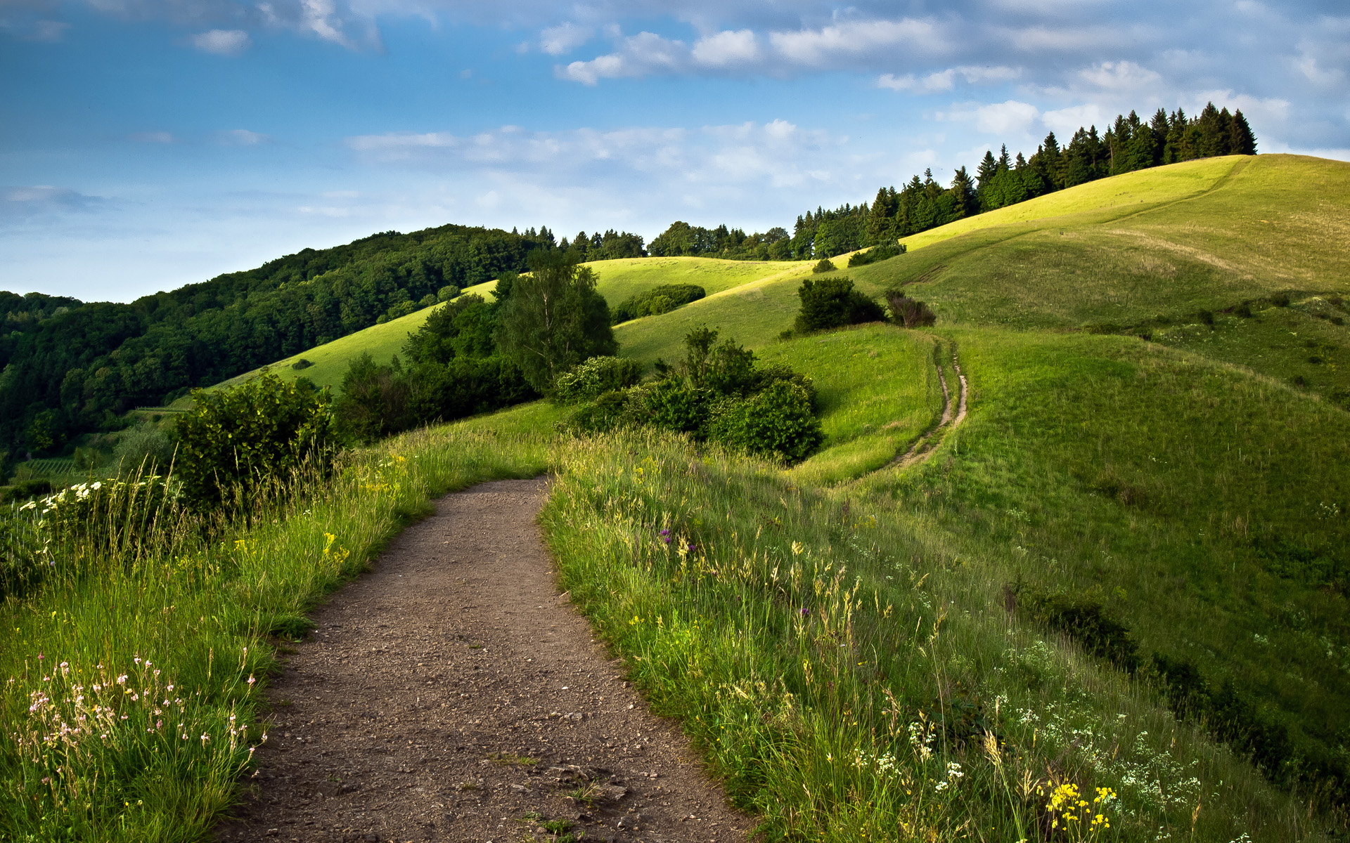 Path Green Fields