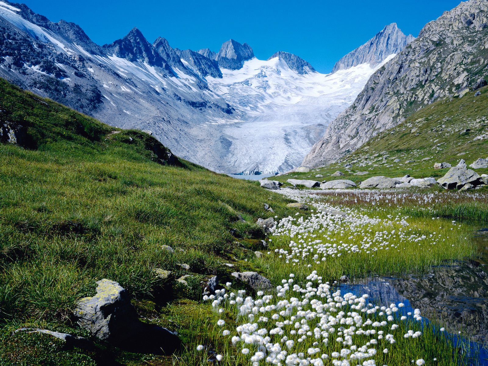 White Flowers Ice-Flow in Switzerland 726.95 Kb