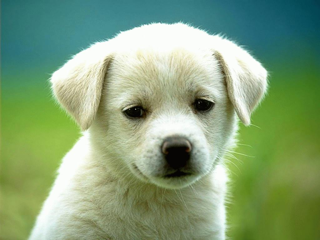 Upset White Puppy Pictures Of Animals 609.16 Kb
