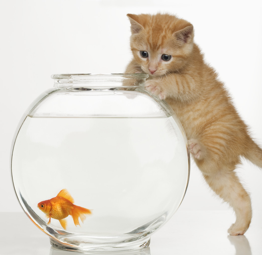 Pictures Of Animals, Kitty Tries to Catch a Fish 609.16 Kb