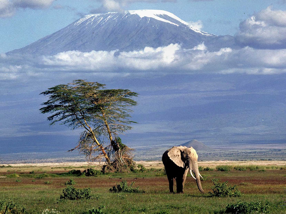 Elephant in Beautiful Nature in Kenya 252.98 Kb