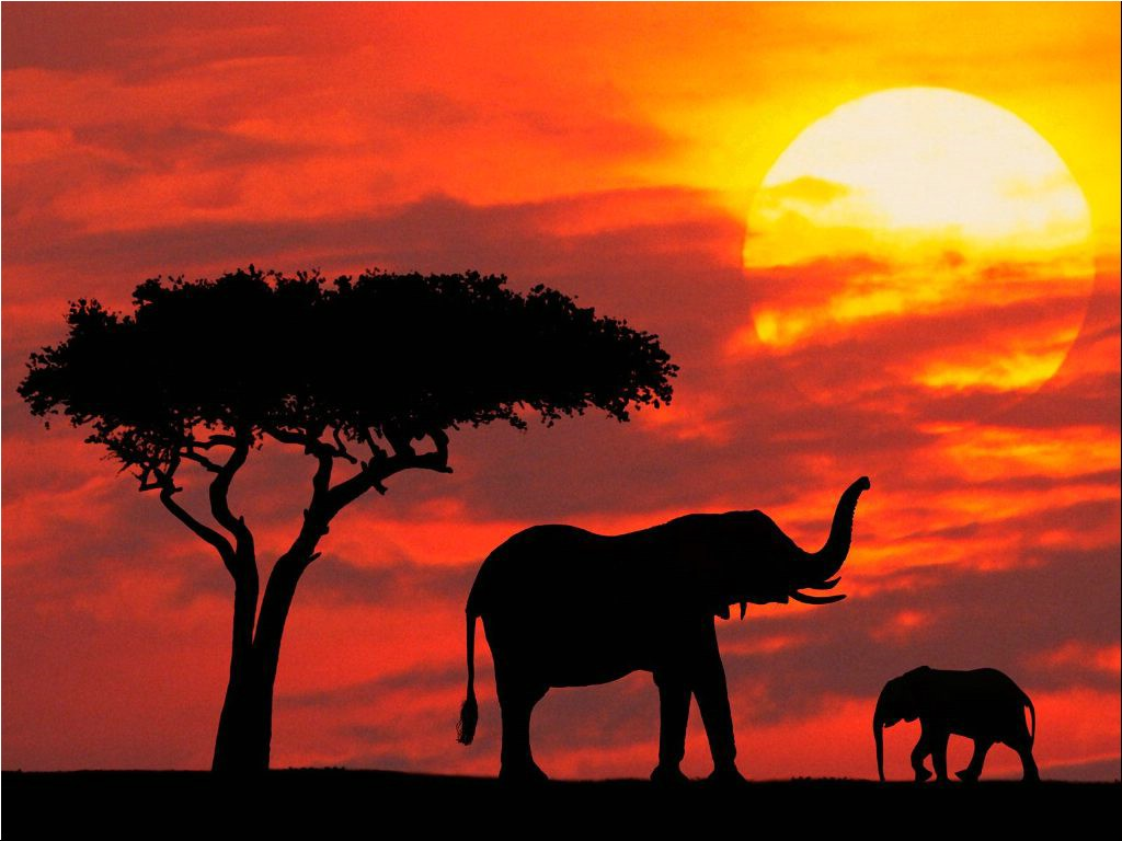 Elephants in Red Sunset in Kenya 252.98 Kb