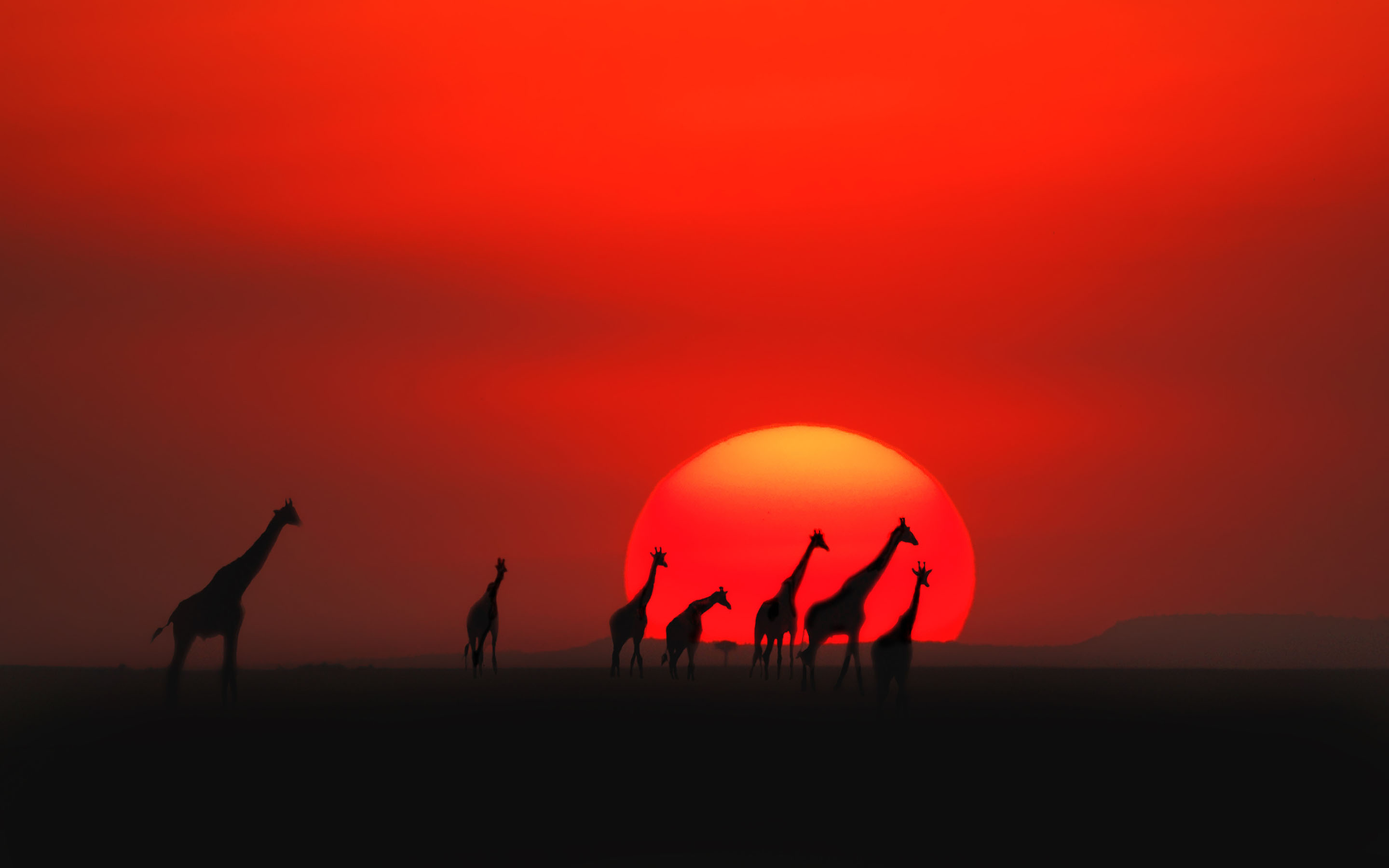 Giraffes on Sunset Background in Kenya 252.98 Kb