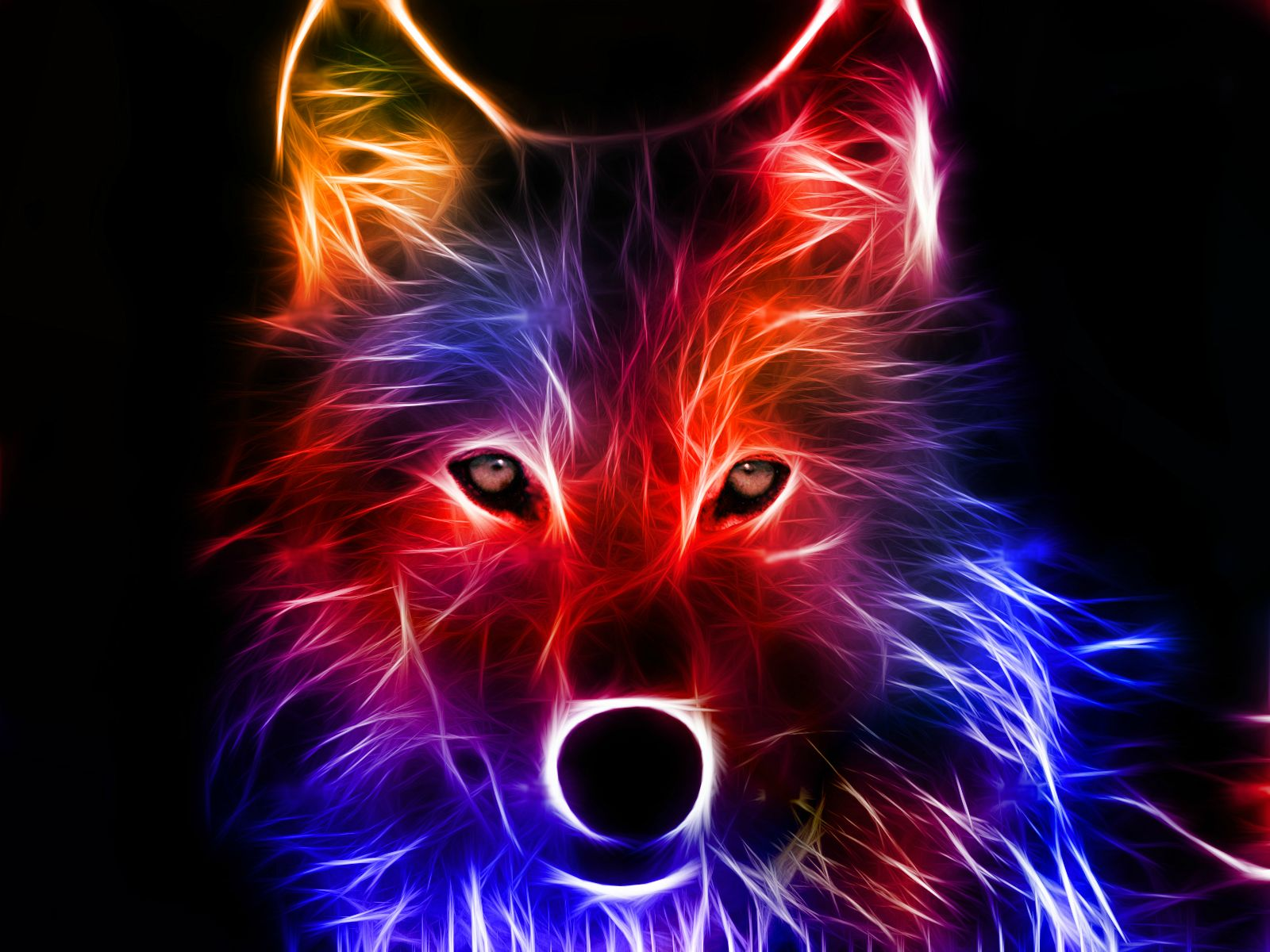 Colorful Illuminated Wolf, Wallpaper 3D