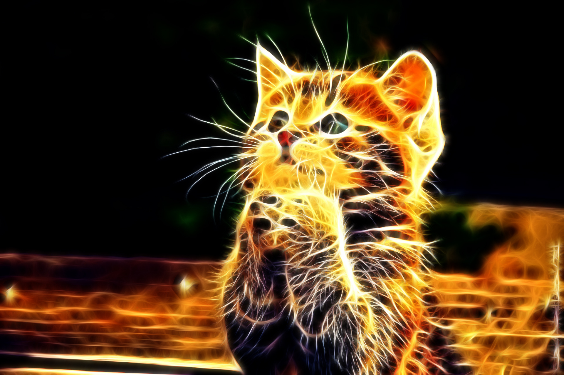 Illuminated Fire Kitten, Wallpaper 3D 1023.1 Kb