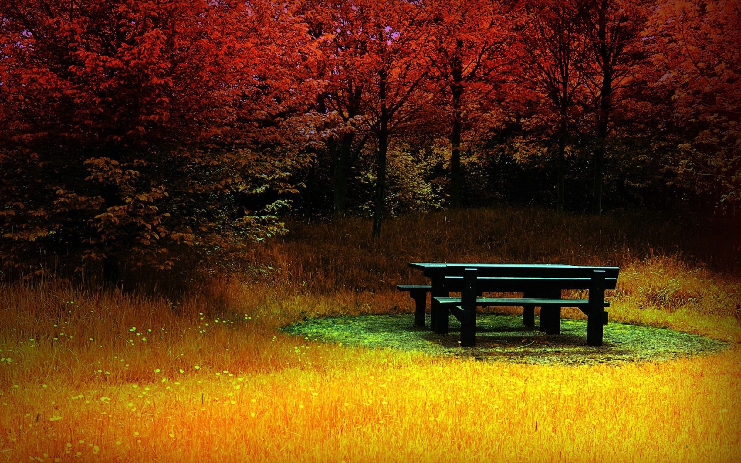 Wallpaper Nature, Lonely Bench in the Woods 369.81 Kb