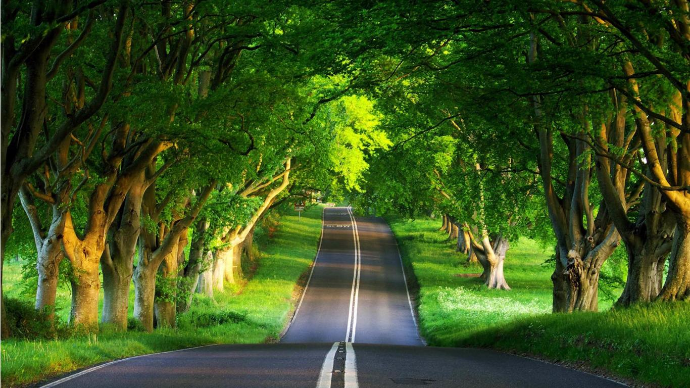 Road Under Trees On Desktop Wallpaper 4235598 1366x768