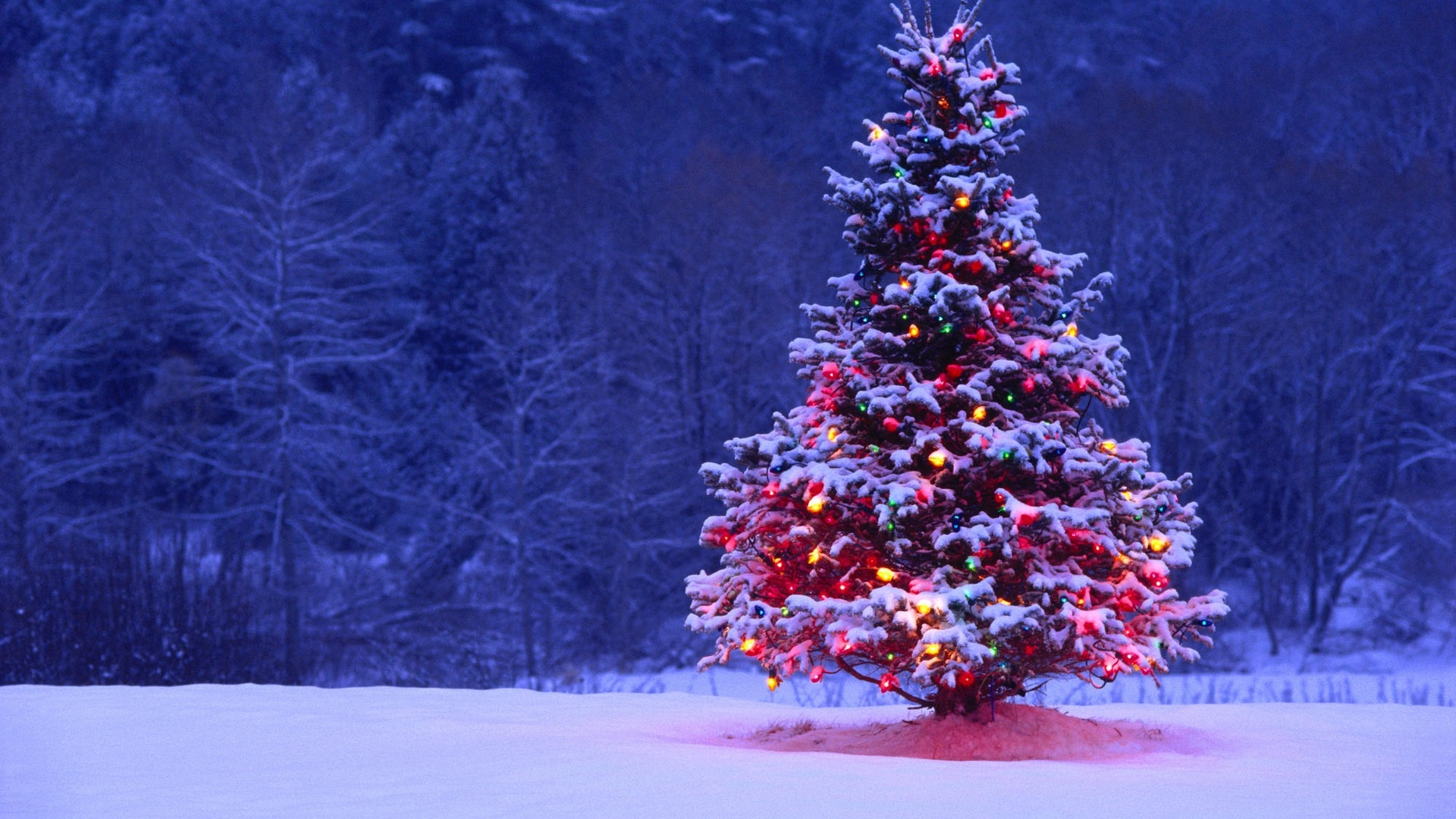 Images Of Christmas Tree with Snow and Lights 113.07 Kb