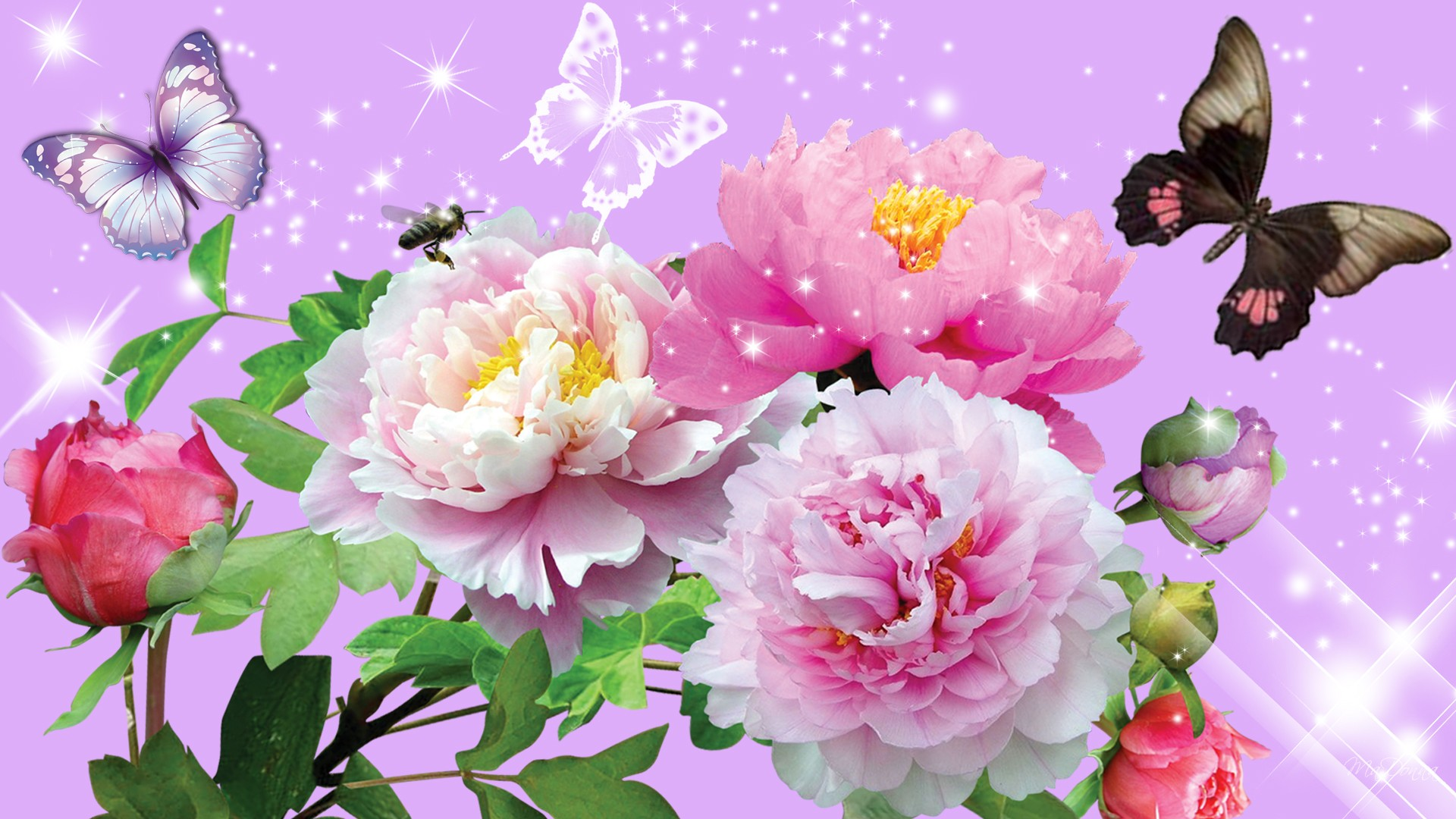 Images Of Flowers Pink Peony 2857.23 Kb