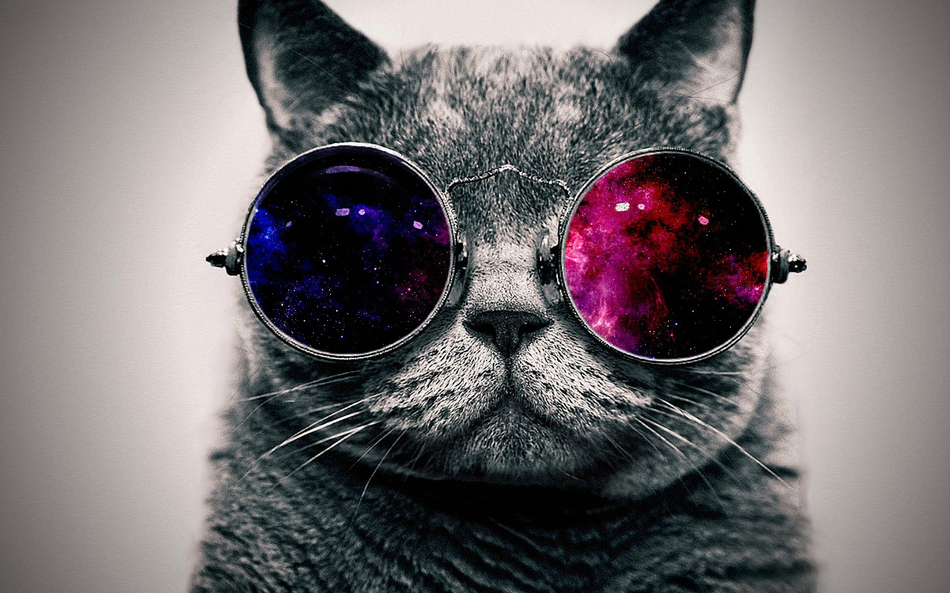 Cat in Purple Sunglasses, Cool Wallpapers  136.65 Kb
