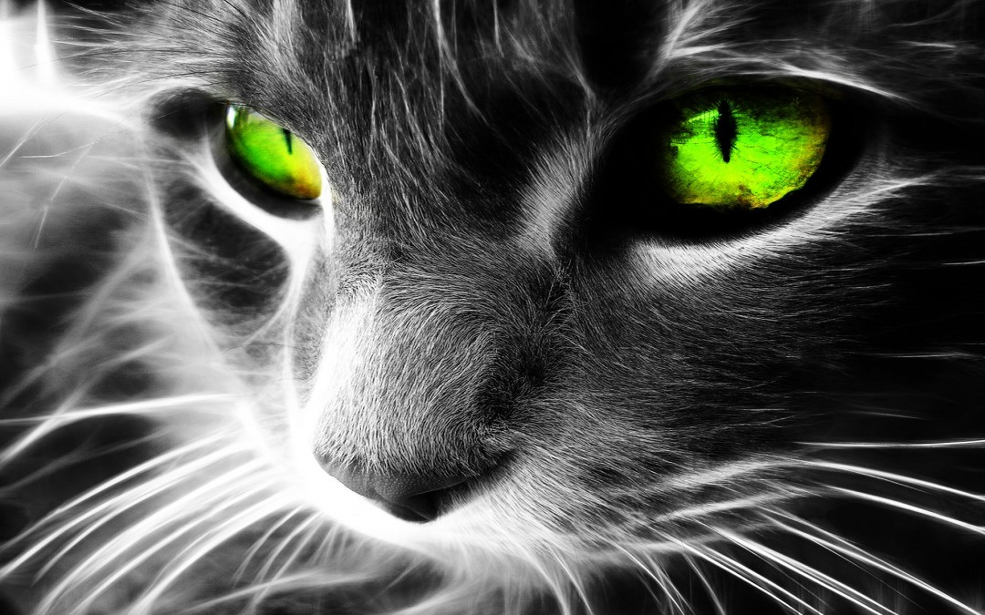 Cool Images of Cats with Green Eyes 2084.15 Kb