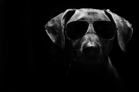 Cool Images of a Dog in Sunglasses 216.7 Kb