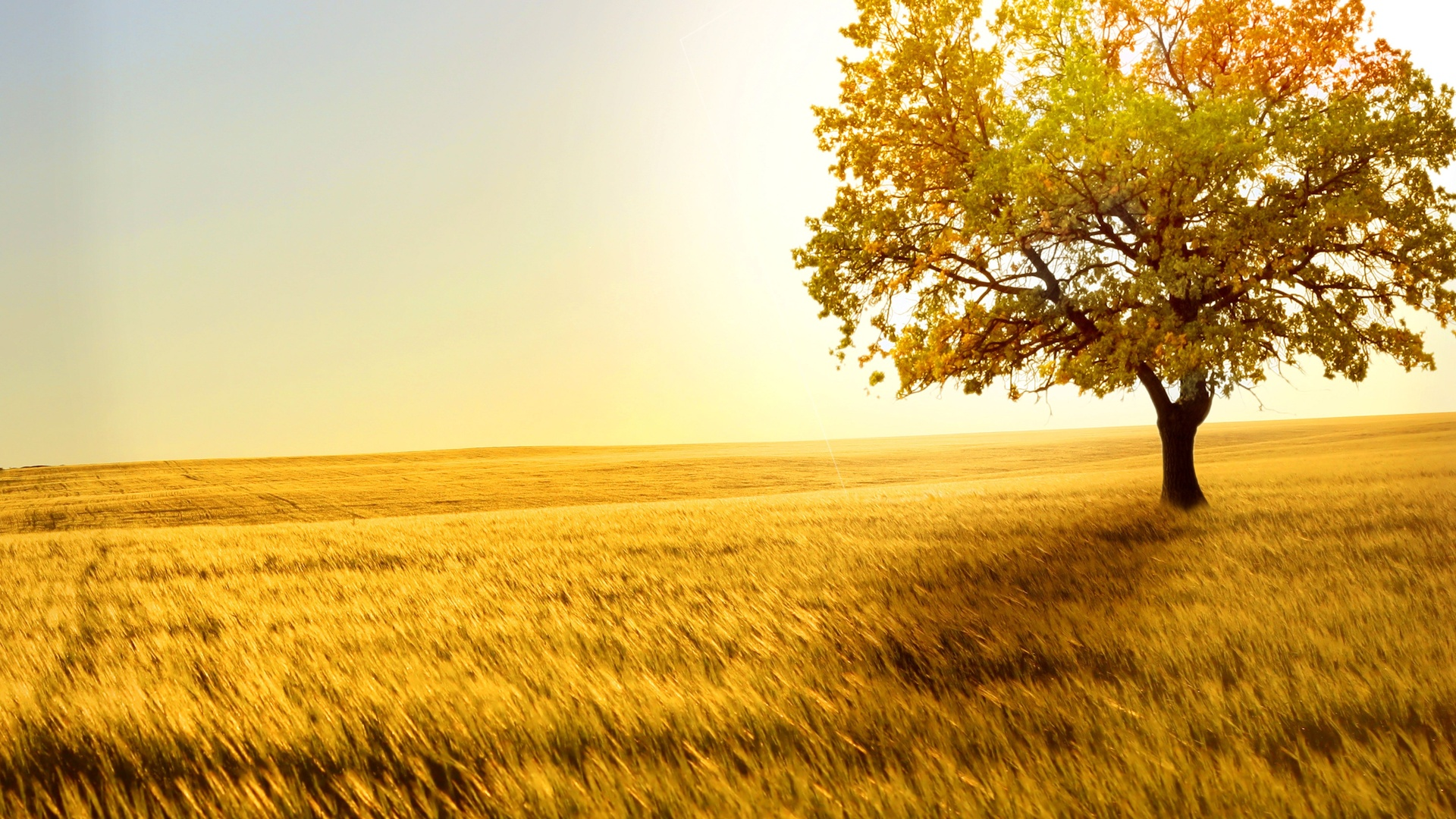Wallpapers Download Yellow Field 562.12 Kb