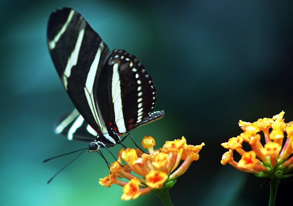 Wallpapers Download Butterfly on a Flower 227.97 Kb