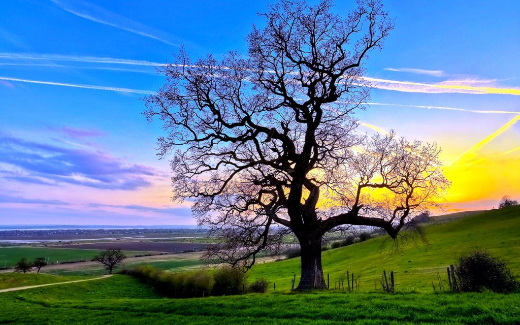 Wallpapers Download Lonely Tree 227.97 Kb