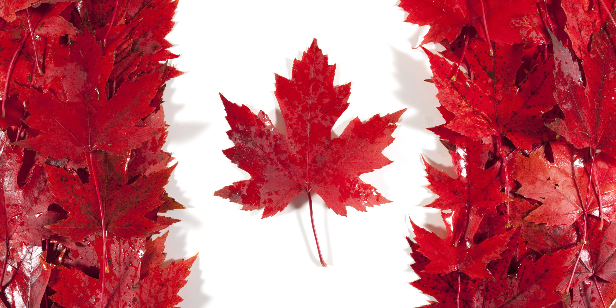 Canada Maple Leaves Frame 937.48 Kb
