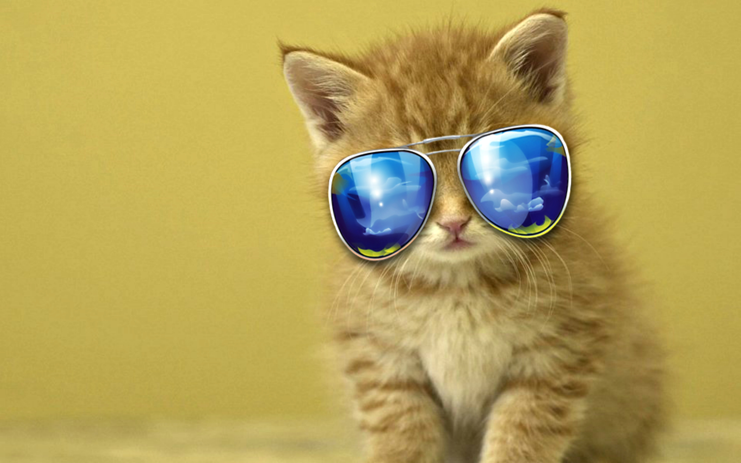 Cool Pictures of a Kitten in Sunglasses 1585 Kb