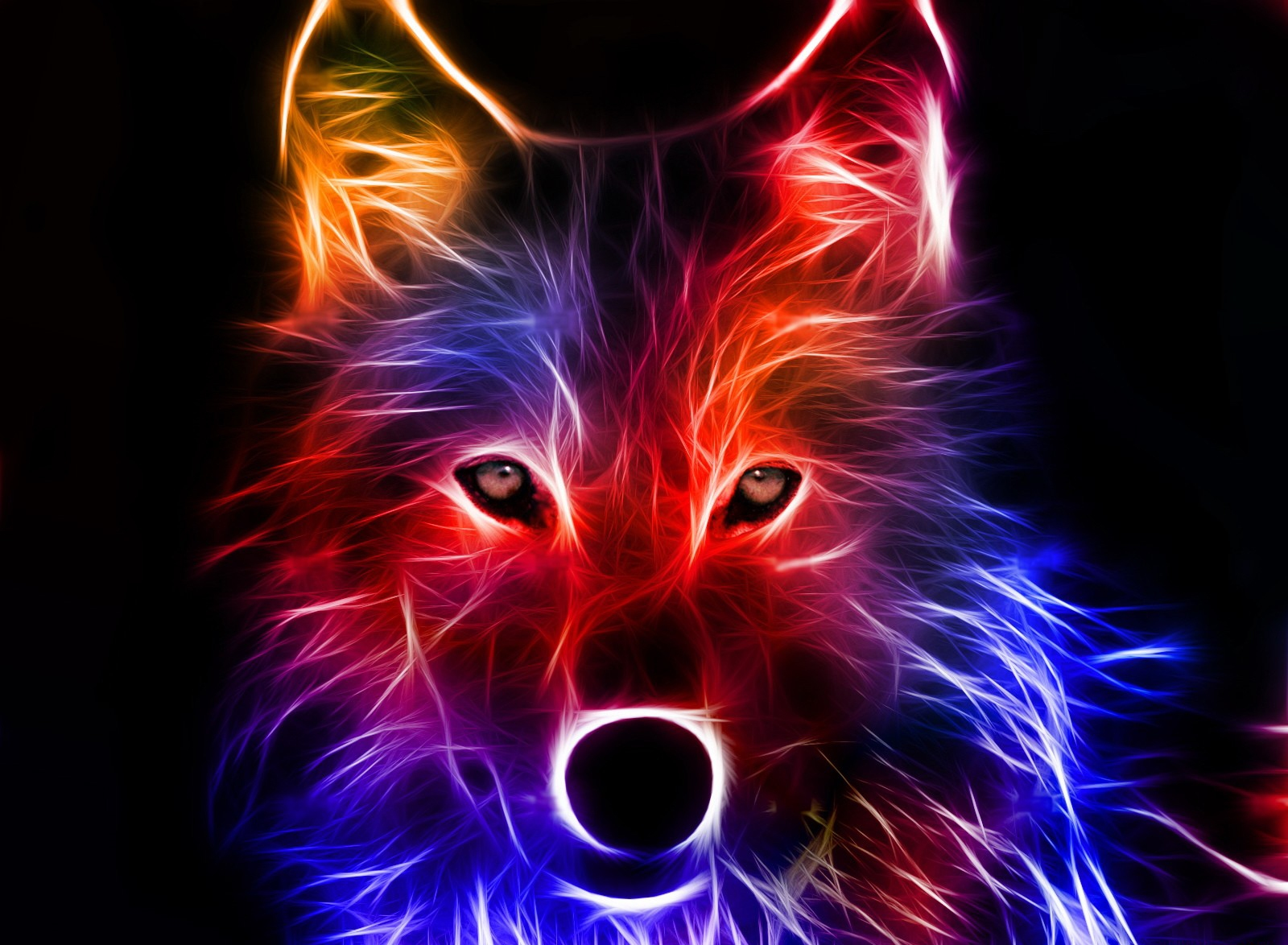 cool pictures of illuminated wolf 4237463 1600x1174 all for desktop