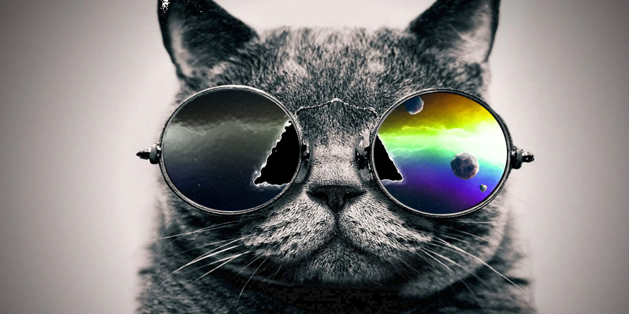 Cool Pictures of a Cat in Sunglasses
