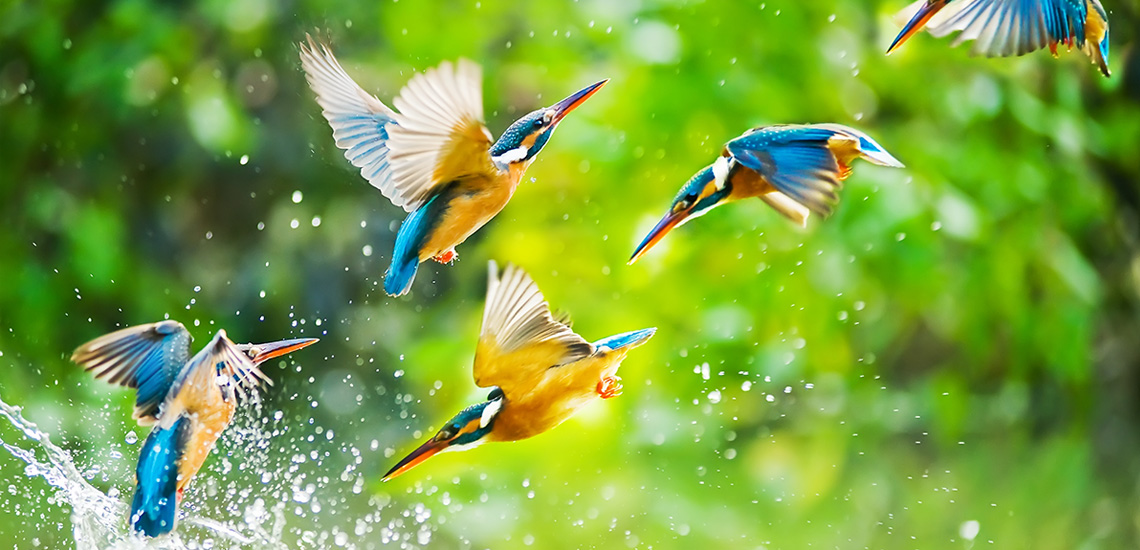 Images of Birds Splashing in the Water