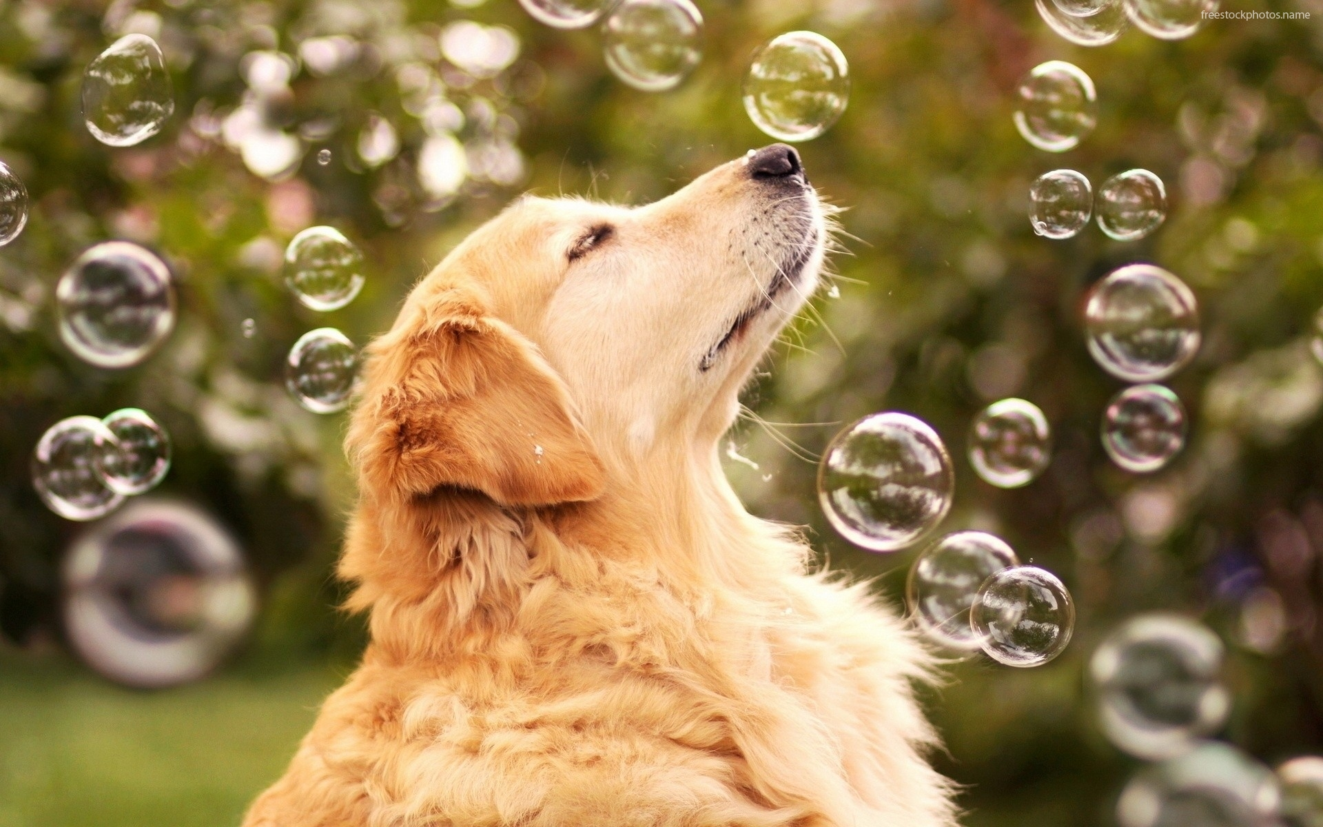 Images of a Dog Catching Soup Bubbles 216.38 Kb