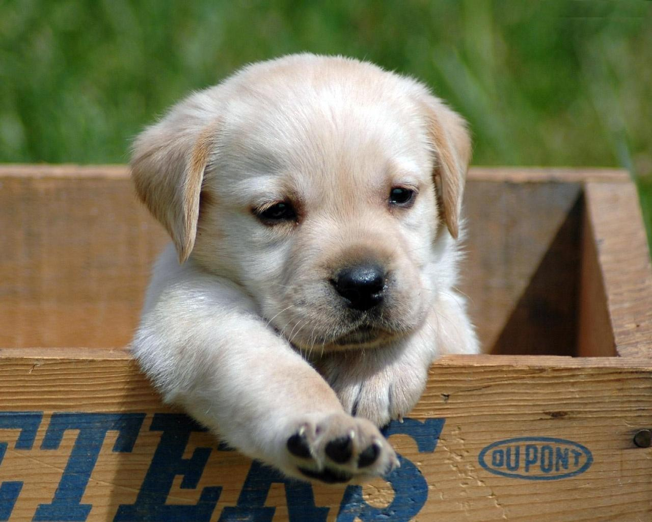 Pictures Of Puppies in a Box 156.34 Kb